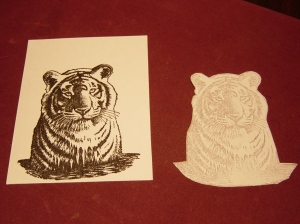 Tiger and cut out image